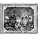 Plakát ZOOT Originál Kočičí rodinka