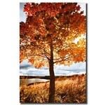 Tištěný obraz Strom