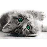 Plakát kočička 160 x 115 cm