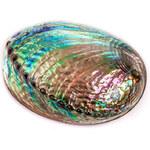 Buka Jewelry BUKA Abalone mušle (Paua) 961