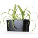 Samozavlažovací květináč Combi černý 56 x 28 cm G21 G21-639248