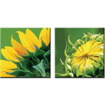 StarDeco Obrazy Sunflower