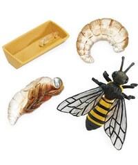 Safari LTD Životní cyklus - Včela c983380c7f