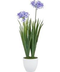 Kunstblume, Home affaire, »Agapanthus mit 2 oder 3 Blüten«