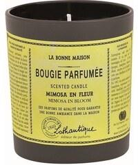 Lothantique Vonná svíčka La Bonne Maison - Mimosa