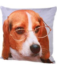 TopMode Polštářek fototisk pes brýle