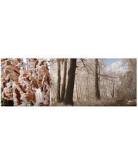 Obraz FENG-SHUI kov-Pohádkový les