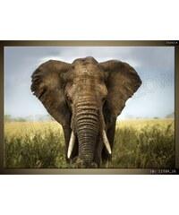 ART Obraz 70 x 50 cm slon