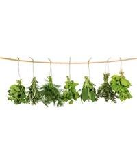 Glasbild EUROGRAPHICS Hanging Herbs 80/30 cm EUROGRAPHICS grün