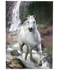 Wandbild Weißes Pferd PREMIUM PICTURE weiß