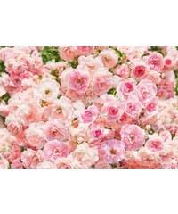KOMAR Fototapete 368/254 cm rosa
