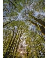 KOMAR Fototapete Canopy 184/254 cm grün