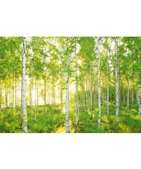 KOMAR Fototapete Sunday 368/254 cm grün B/H: 368/254 cm