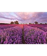 KOMAR Fototapete Lavendel 184/127 cm lila