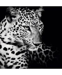 Home affaire, Deco Block »Könige der Natur - Leopard«, 90/90 cm