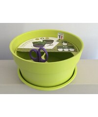 Coupe aromatique dustwood Chatelain-vert anis-2126007