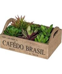 Kunstpflanze »Sukkulenten« inkl. Pflanzgefäß