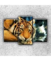 Xdecor Tygří pohled 5 (75 x 50 cm) - Třídílný obraz