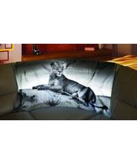 Xdecor Ležící lev 150 x 120 cm - Fleecová deka
