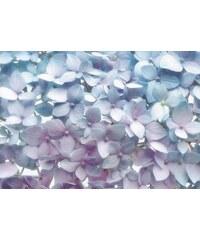 KOMAR Papiertapete Light Blue 368/254 cm weiß
