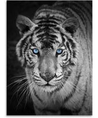 Lesara Kinzler Wohndecke mit Tier-Print - Tiger
