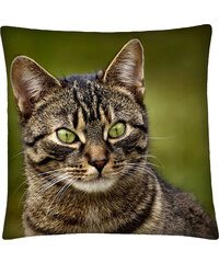 Polštář s motivem kočky 19, zelená, Mybesthome 40x40 cm Varianta: Povlak na polštář, 40x40 cm