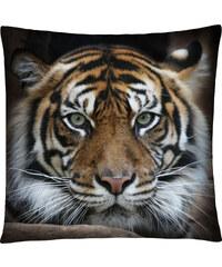Polštář s motivem tygra 05 Mybesthome 40x40 cm Varianta: Povlak na polštář, 40x40 cm