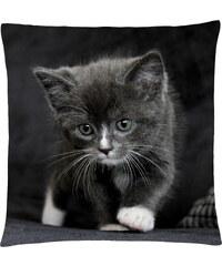 Polštář s motivem kočky 31, černá, Mybesthome 40x40 cm Varianta: Povlak na polštář, 40x40 cm