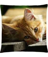 Polštář s motivem kočky 34, oranžová, Mybesthome 40x40 cm Varianta: Povlak na polštář, 40x40 cm