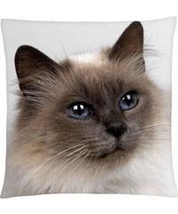 Polštář s motivem kočky 35, hnědá, Mybesthome 40x40 cm Varianta: Povlak na polštář, 40x40 cm