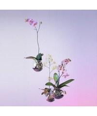 Baletka Petr & Behrová Eva Létající orchidej - květináč (transparentní)