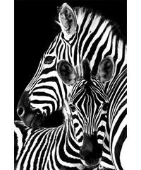 Home affaire, Deco Panel, »Zebras«, 60/90 cm