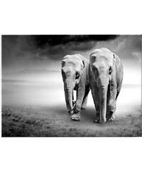 GRAHAM & BROWN Glasbild »Elefanten«