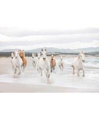 KOMAR Fototapete White Horses 368/254 cm natur