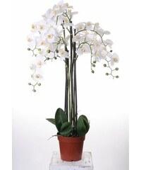 Orchidee XXL HOME AFFAIRE weiß