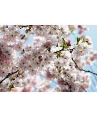 Fototapete, Komar, »Spring«, 368/254 cm