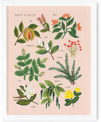 RIFLE PAPER Co. HERBS & SPICES PEACH