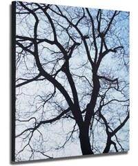 VÝPRODEJ Obraz 50x50cm Old Trees 1 REMEMBER
