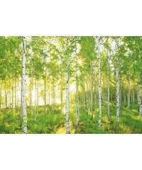 KOMAR Fototapete Sunday 368/254 cm grün B/H: 368/248 cm