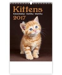 Helma 365, s.r.o. Nástěnný kalendář Kočičky - Kittens 2017 N170-17