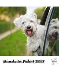 DuMont Kalenderverlag GmbH & Co. KG Nástěnný kalendář Psi na cestách / Hunde in Fahrt 2017 17DU3603