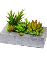 bpc living Plantes artificielles Succulentes en pot vert maison - bonprix
