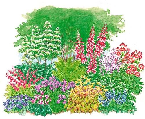 Set: Pflanzenset »Schattenpflanzen« (11 Pfl.)