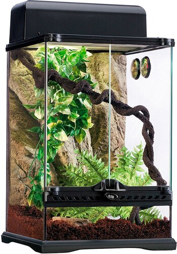 Terrarium-Set »Rainforest«