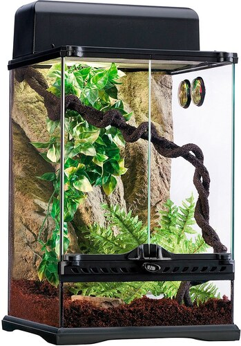 Terrarium-Set »Rainforest«