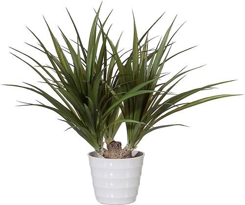 Kunstpflanze »Dracena« inkl. Pflanzgefäß (H: 60 cm)