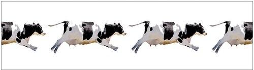 Küchenrückwand - Spritzschutz »profix«, Fliegende Kuh, 220x60 cm